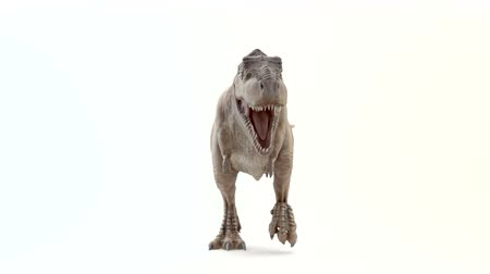 dinossauro : Tyrannosaurus Rex in motion of attack Stock Footage