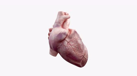 areszt : 3D animated human heart
