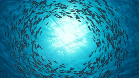 exotisme : School of Fish.Sharks nagent en cercle.