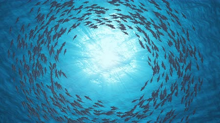 on nature : School Of Fish.Sharks swim in a circle.
