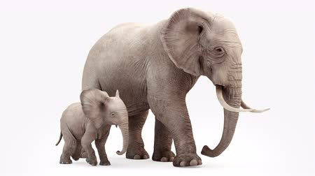 marfim : Cg animation. Elephant and elephant baby go.Loop animation.