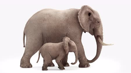 white elephant : Cg animation. Elephant and elephant baby go.Loop animation.