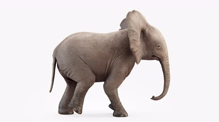 marfim : Cg animation. Elephant baby walk.Loop animation.