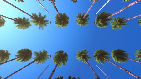 Driving under palm trees at a resort. Slow motion.