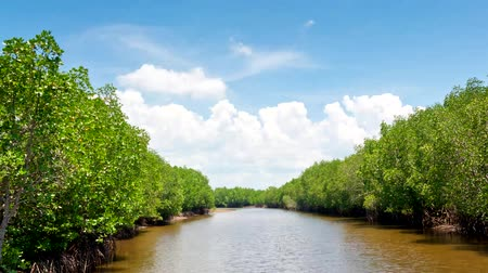 tuzluk : Mangrove forest with blue sky time-lapse Stok Video