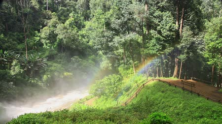 esőerdő : Rainbow at a tropical rain forest
