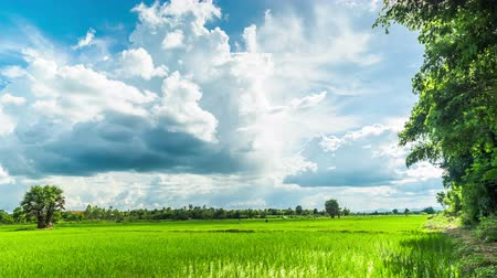 nações : Rain clouds over the paddy field in Thailand