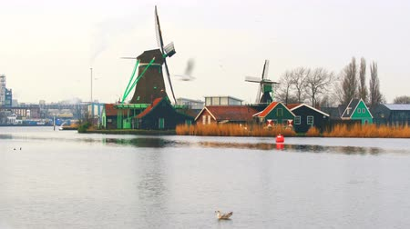holandês : View of windmills and seagulls  at Zaanse Schans village, Netherlands