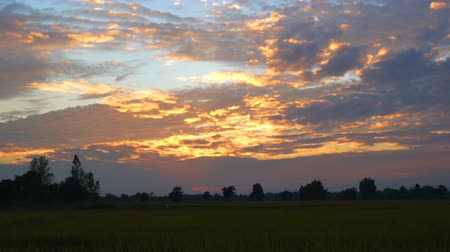 Sunset at paddy field in Lampang Thailand
