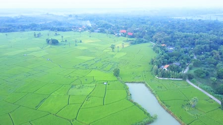 Aerial view of paddy field near a village in the rural of Thailand