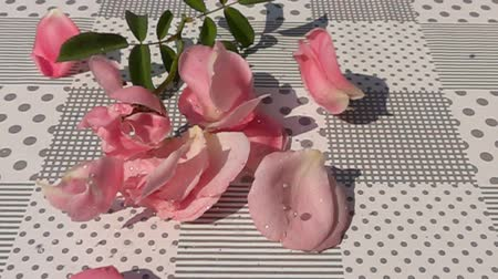 scatters : Pink withered rose falling on the table in Slow Motion Stock Footage