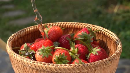 Pour water to a pile of fresh strawberries in a bamboo basket in Slow Motion Stok Video