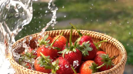 Wash strawberries in bamboo basket with fresh water in Slow Motion
