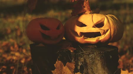 dynia : Two scary pumpkin lantern on a stump. Wideo