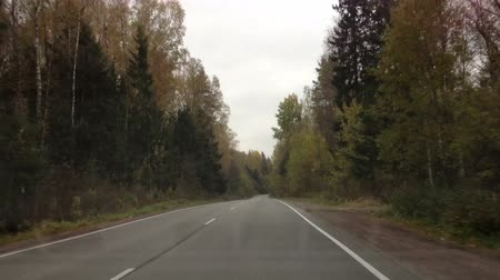 high speed road : Timelapse riding on forest road. Forest road in autumn Stock Footage