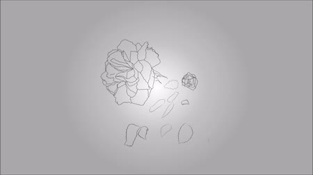çizmek : Animation of illustration draw a white rose Stok Video