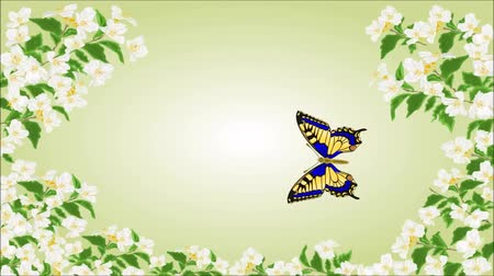 inachis io : Animation of illustration video seamless loop butterfly Swallowtail in jasmine