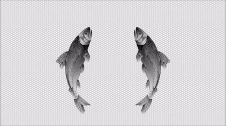 jump : Video seamless loop  animation of illustration trout jumping checkered background
