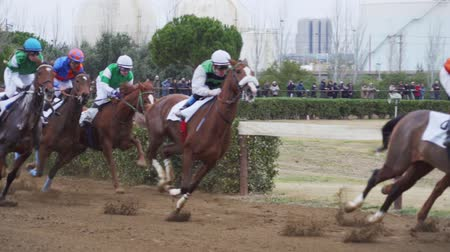 horserace : Galloping Thoroughbred horses in Cos de Sant Antoni racing competition. Slow motion