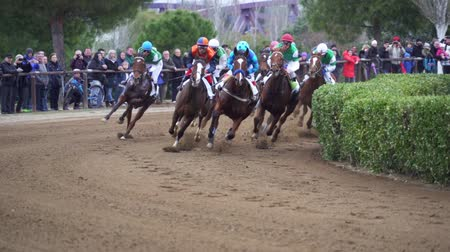 závodní dráha : Galloping Thoroughbred horses in Cos de Sant Antoni racing competition. Slow motion