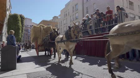 jubileu : Reus, Spain. March 2019: Horses blessing in St. Anthonys day.