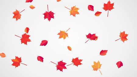 autumn : Falling Autumn Leaves animation.Looped 4k video, beautiful fall leaves move down under little wind. Autumnal mood. Can use this clip for background or overlays on your image, video project.