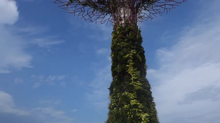 formální zahrada : The Supertree at Gardens by the Bay