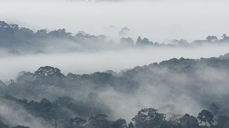 enevoado : Morning fog in dense tropical rainforest at Khao Yai national park, Thailand