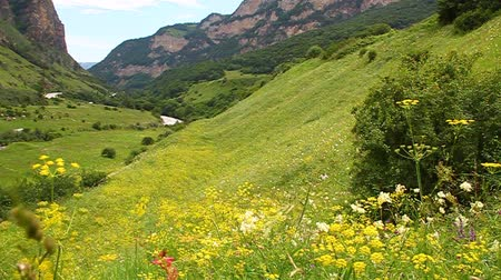 otlak : View of the valley, flowering meadows Stok Video