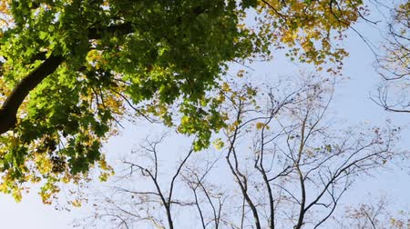 yelow : leaves from the tree. Blue sky