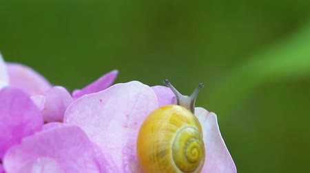 Snail Creeps In The Garden. Leaf And Grass