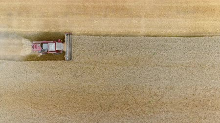 Aerial View Of Harvesters. Season Of Gathering Crops. Combines Harvesting Wheat On The Field.