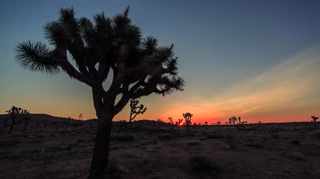 sunrise in the desert. in the wilderness sometimes do not grow large pine tree.