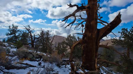 eastern sierra : View of the Fallen Tree in the Mountains of California.