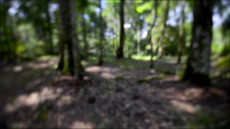 medo : running escape away through forest by fear chased blurred out