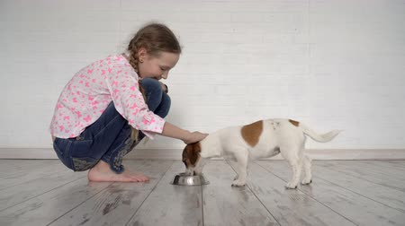 Child feeds a dog from a bowl Wideo