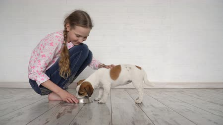 terier : Child feeds a dog from a bowl Wideo