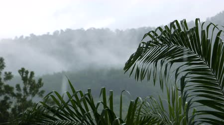 aventura : shower rain in tropical mountain rainforest jungle with mist, fog and clouds
