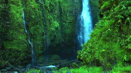 amazonka : Tropical Lush Waterfall