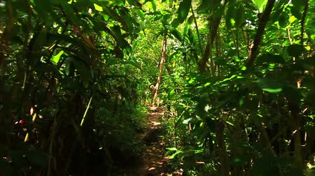 point of view pov : First Person View Walking Thru Jungle
