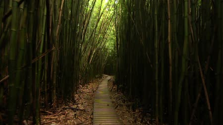 bamboo forest : Walking In Bamboo Forest, Steadicam Shot (HD)