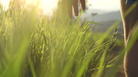 Close Up Of Hand In Tall Grass At Sunset With Lens Flare