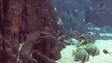 щупальце : Fishes and plants Reef tank filled with water for keeping live underwater animals.