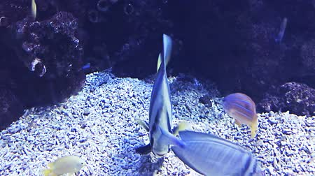 barriers : Fishes and plants Reef tank filled with water for keeping live underwater animals.