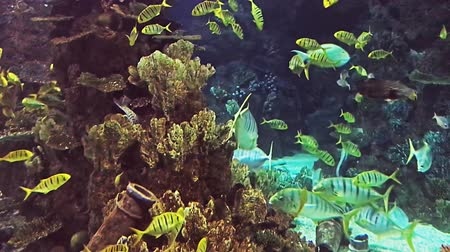 fluorescent : Fishes and plants Reef tank filled with water for keeping live underwater animals.