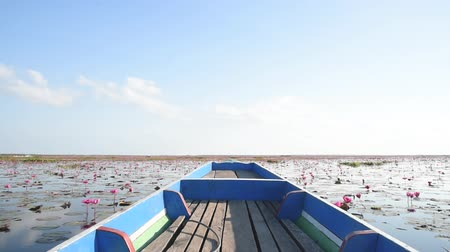 genuíno : Scene of pink lotus field from longtail boat Stock Footage