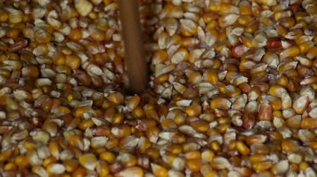 мучной : Grains of corn milling slow motion. corn large number crushed. Cooking corn flour. Grinding corn kernels. ancient way of grinding grain
