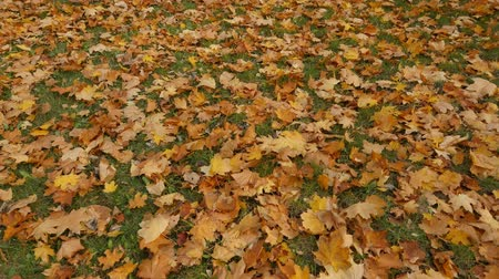 gerekçesiyle : yellow leaves in autumn on the road.