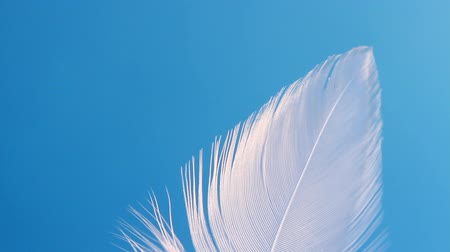 boa : Feather swaying in wind close-up macro. Selective focus, blurred focus, abstraction.
