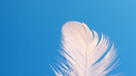 боа : Feather swaying in wind close-up macro. Selective focus, blurred focus, abstraction.